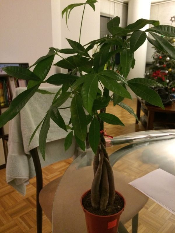 Free Plant Identification (With images) Houseplants