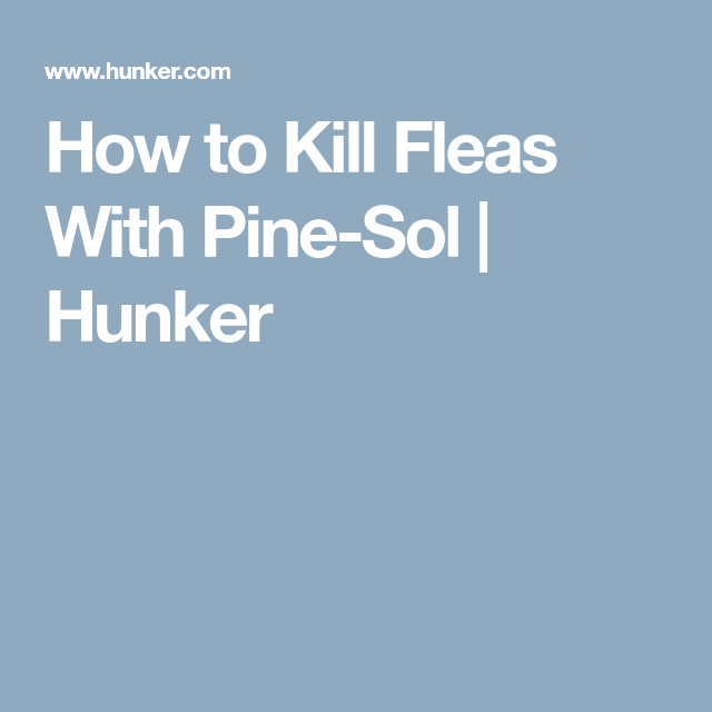 Pin On Flea Remedies