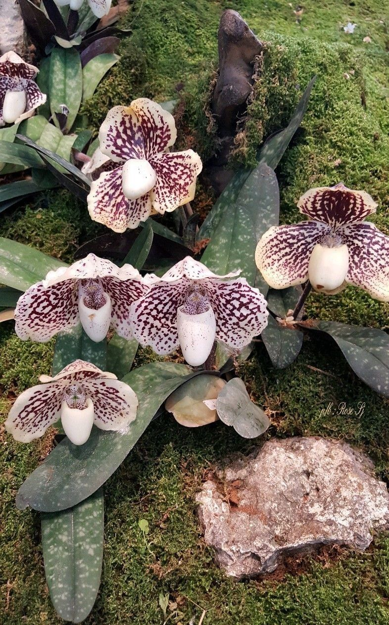 Pin by flowers in heart on orchids collection pinterest orchid