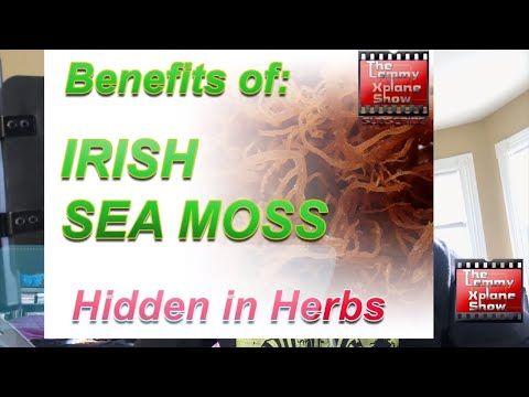 Benefits of Irish sea moss - YouTube #irishsea