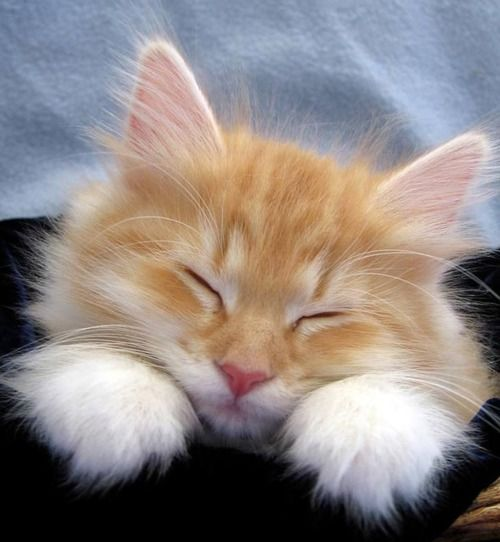 Pin By Emma Rozman On Kittens Cats Cute Cats Kittens Cutest