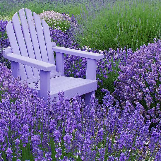 'Come and sit among the Lavender' by Marjorie Wallace