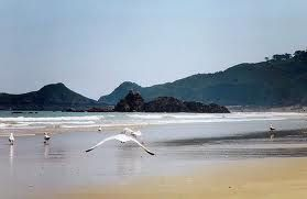 Seagull on Bonaparte beach
