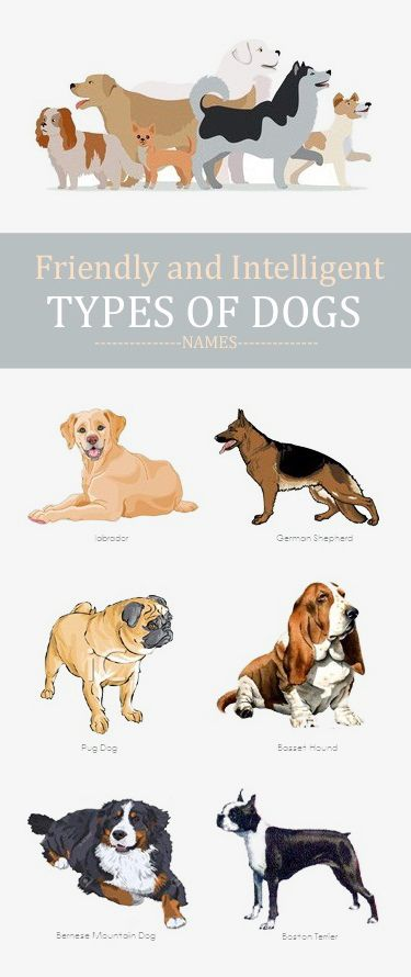 Types Of Dog Breeds With Pictures