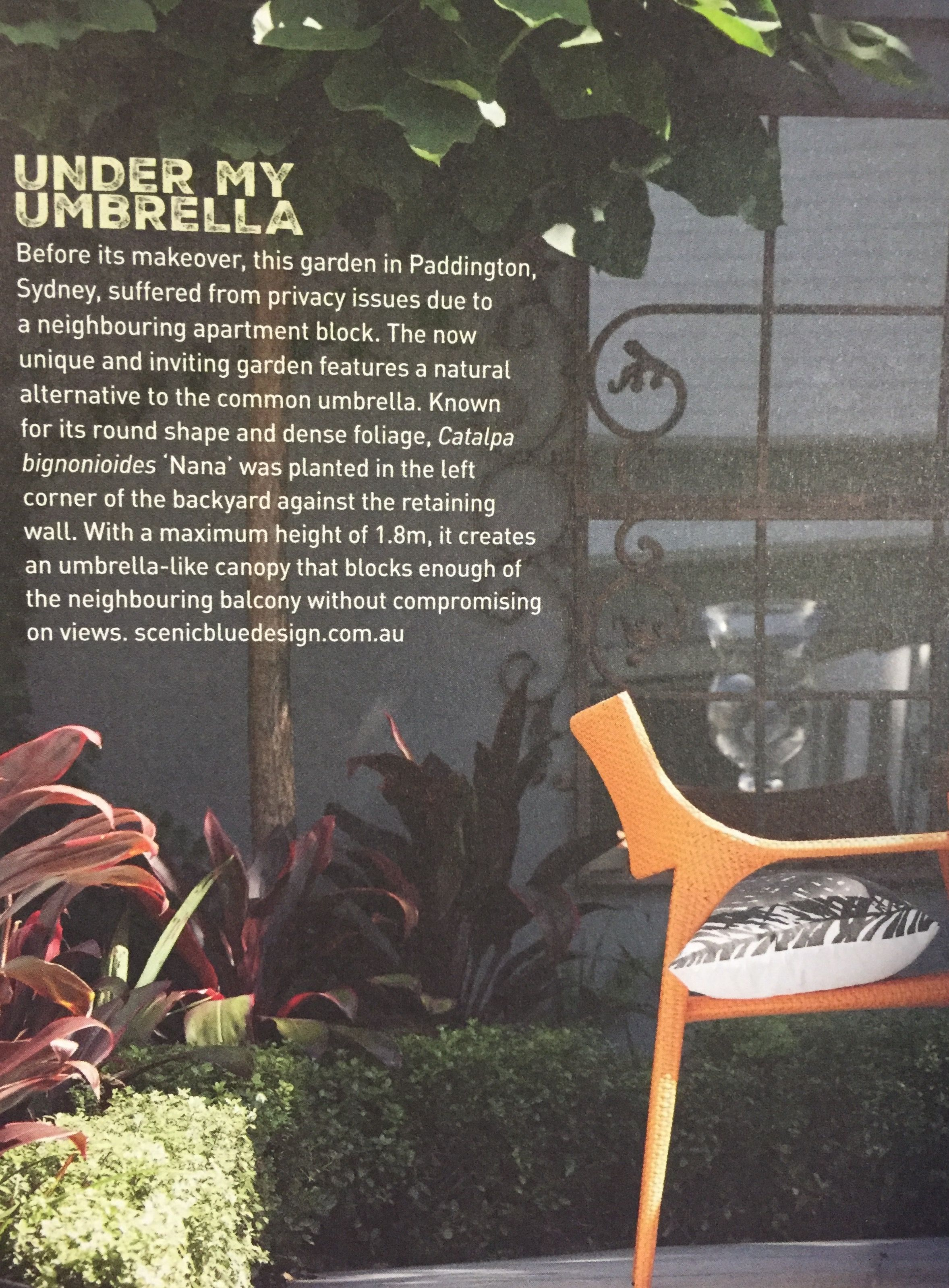 article from backyard magazine i like the sound of the nana tree
