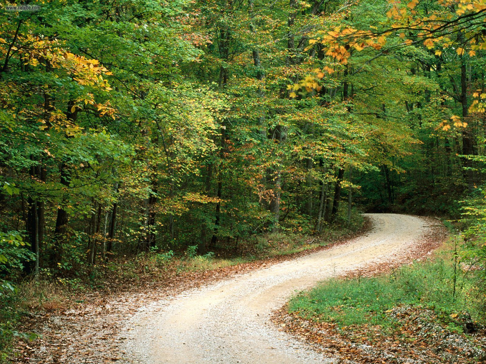 Nashville, Indiana  This looks like it could be the drive back to the cabin we stayed in. :)