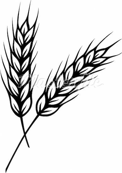 wheat clipart google search shivat haminim pinterest google rh pinterest com wheat clip art free wheat clip art black and white