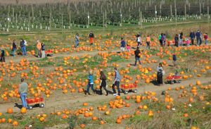 A Guide to Lehigh Valley Fall Fun: Corn Mazes, Pumpkin Patches and More! By Josh Popichak
