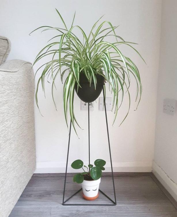 9 plantinhas para ter em casa e que são super fáceis de cuidar ...