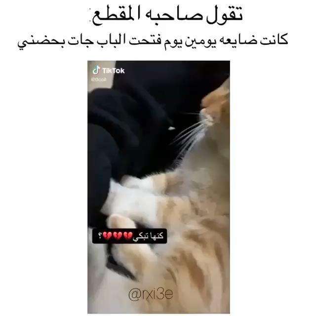 صحت Video Memes Funny Faces Funny Reaction Pictures Funny Quotes For Instagram