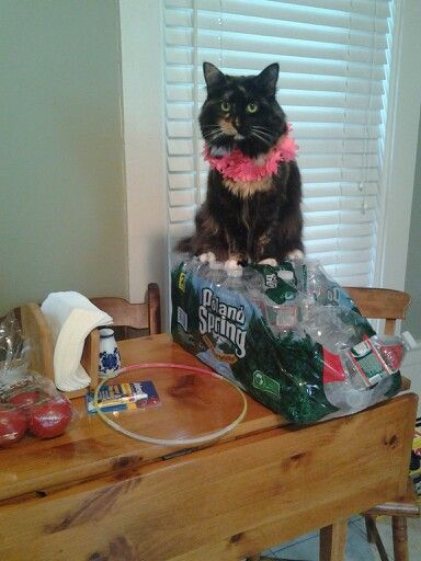Mittens, my cute filled cat. THE BEST PET EVER!!!