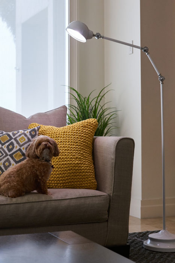 What S Under Your Ottlite Today Be Sure To Give Your Pup A Big Hug Because Today Is Nationalhugyourdogday Tag Us And Use The Hashtags Whatsu White Floor Lamp