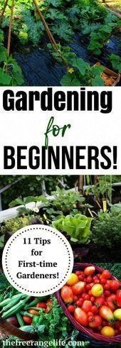 Gardening Tips For Beginners Flowers For Gardening Beginners Flowers Garden Gardening For Beginners Vegetable Garden Planner Garden Layout Vegetable