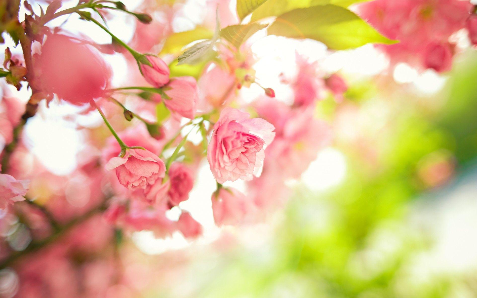 Little Red Roses Beautiful Spring Perfume Beautiful Flowers And Plants Wallpapers Hd Wallpaper Do Flores De Primavera Papel Pintado Flores Fondos De Flores
