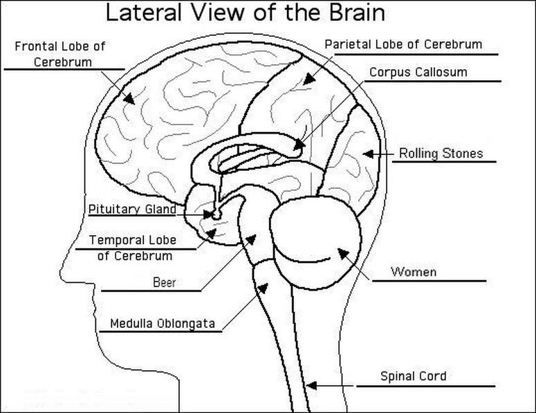Brain Diagram Answer Enchanted Learning Trusted Wiring Diagram