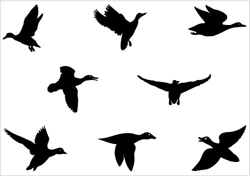 flying duck silhouette vector graphics clipart best clipart best rh pinterest com Duck Silhouette Clip Art flying duck clip art free