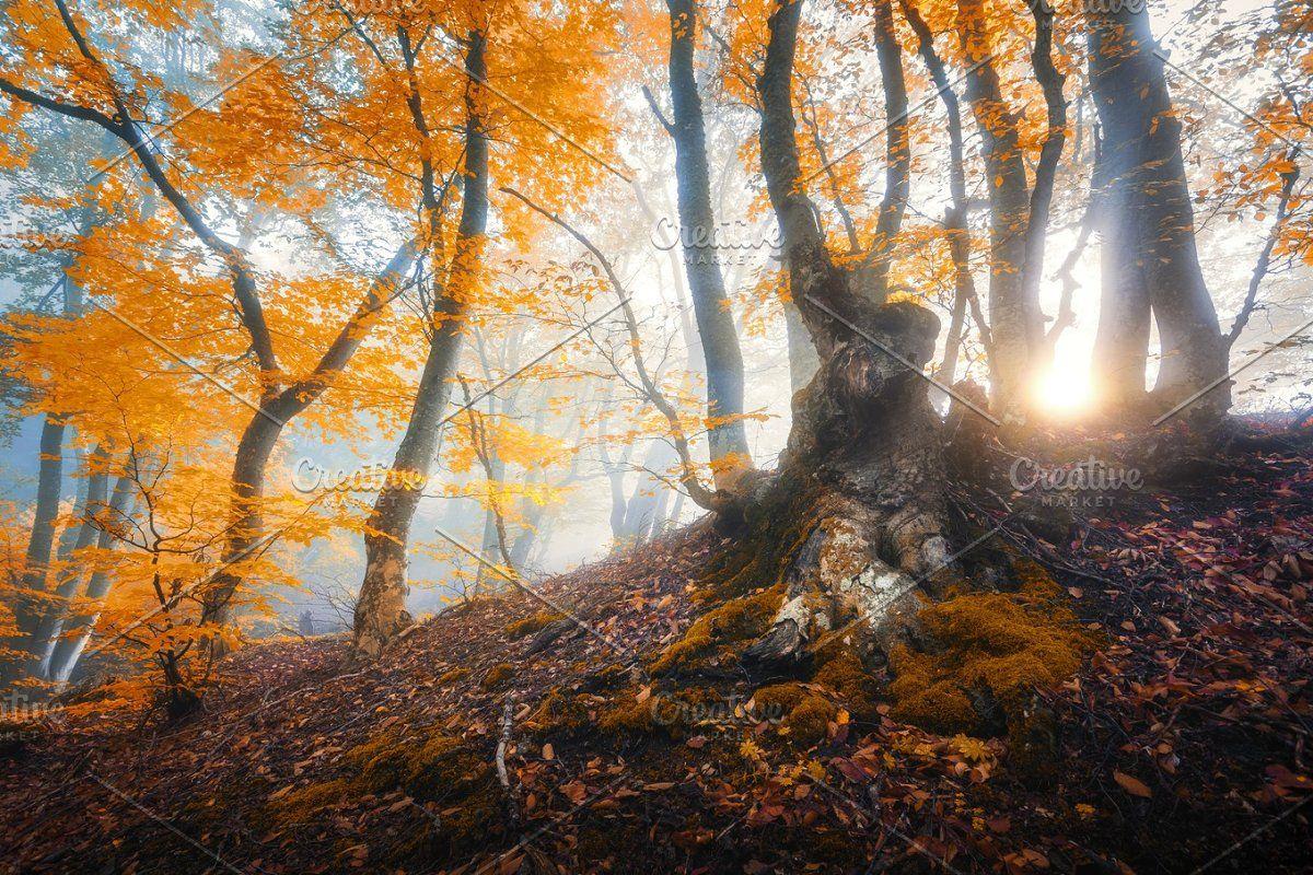 Magical Old Tree With Sun Rays Enchanted Tree Colorful Landscape Tree Beautiful landscape tree plants sun rays