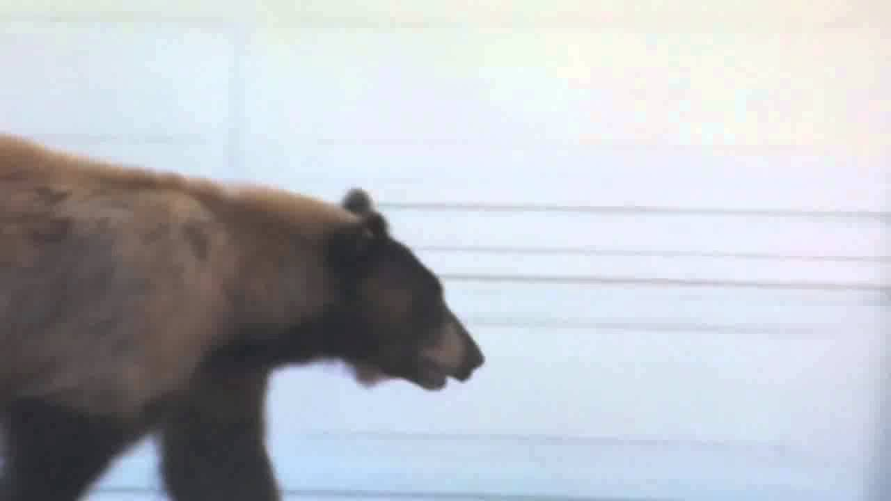 When A Bear And Some Dude Scare Each Other