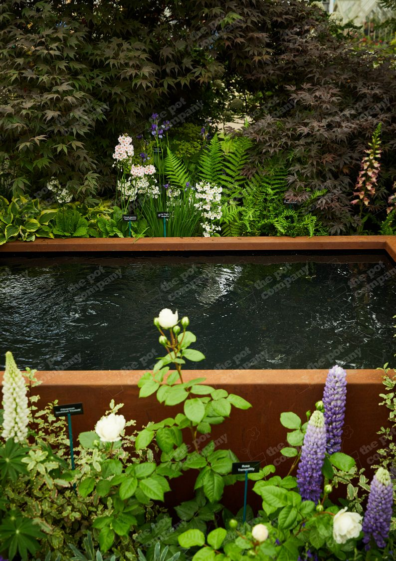 corten steel pond on our corten steel pond at rhs chelsea flower show 2018 in london a perfect water feature for the ga pond water features water features chelsea flower show 2018 our corten steel pond at rhs chelsea