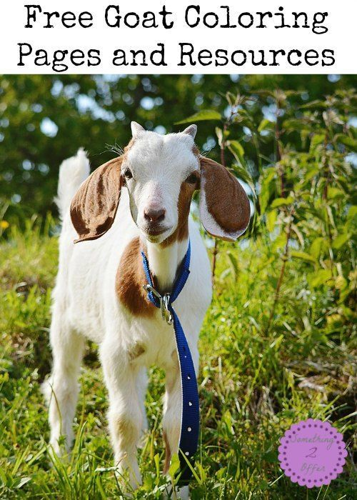 Goat Coloring Pages -   Goats, Farm theme and Nature study