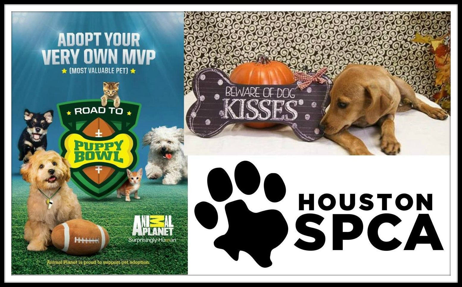 There Is Still Time To Register For Today S Road To Puppy Bowl Event From 3 P M To 7 P M At The Shelter 900 Portway Dri Puppy Bowls Puppies Adoption Options