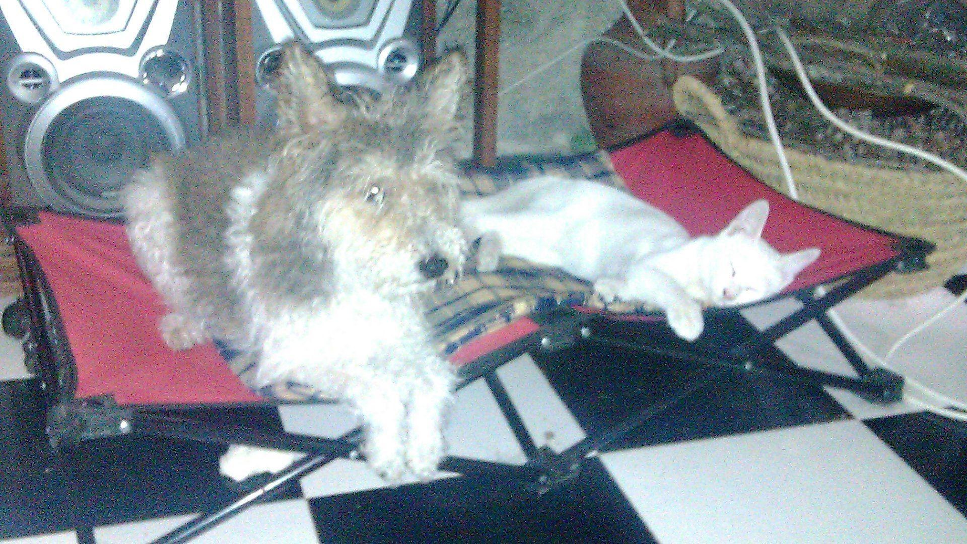 Rufus y Nilo