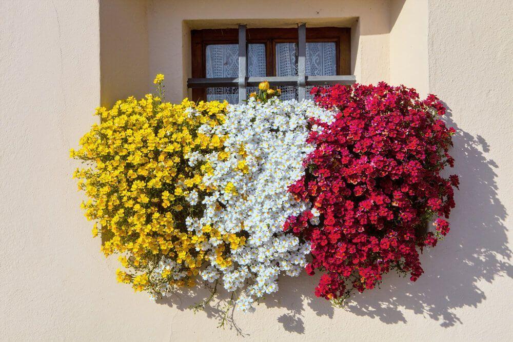 40 Ideen für Fenster- und Balkonblumenkästen (FOTOS)