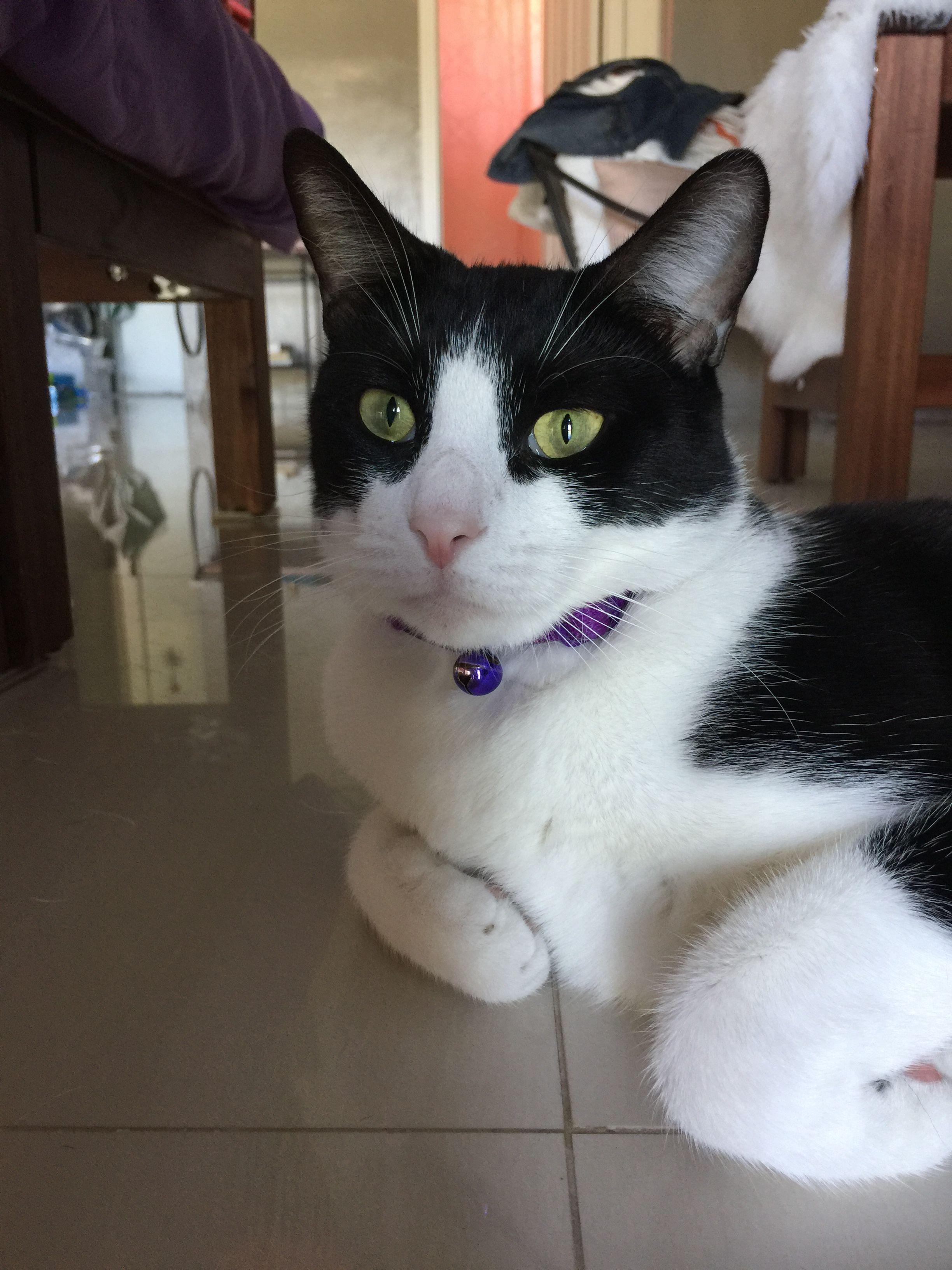 That purple color looks wonderful on a tuxedo cat. Cat