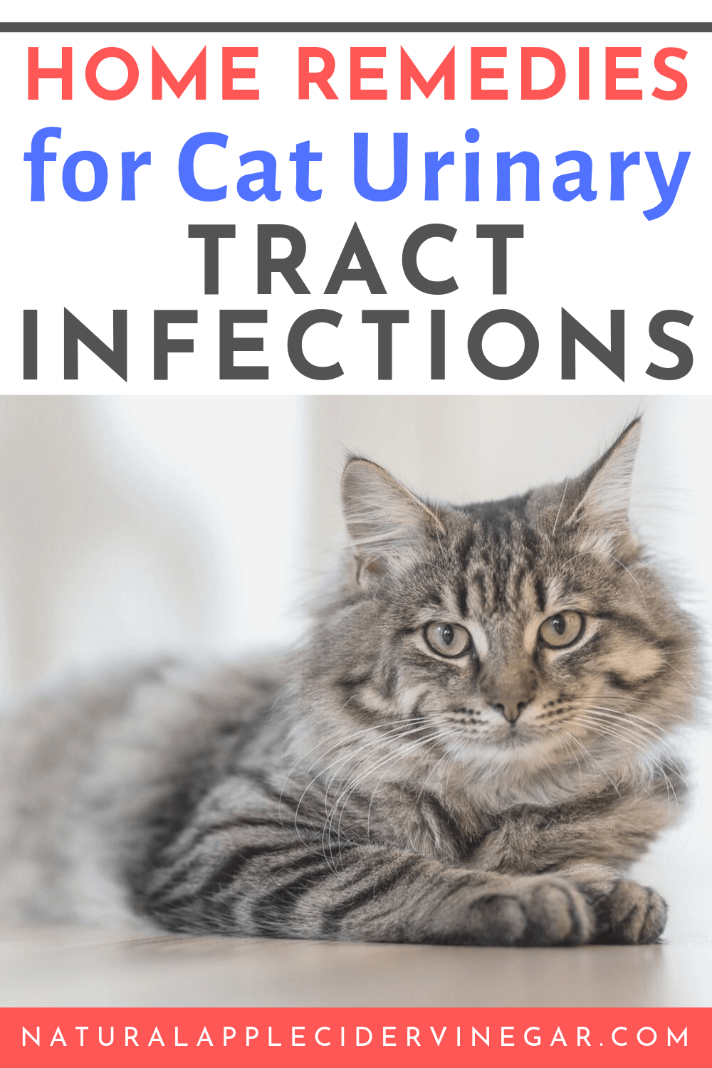 Apple Cider Vinegar Remedy for Cat Urinary Tract