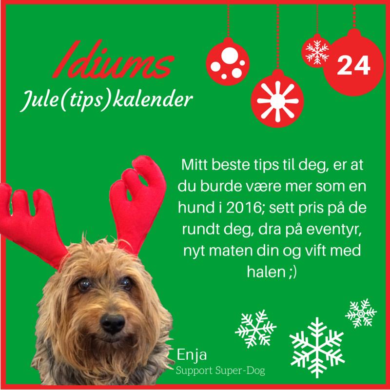 Idiums Jule (tips) kalender #julekalender #sosialemedier #markedsforing #digitalmarkedsføring #markedsføring #hund #dog #bedriftsjulekalender