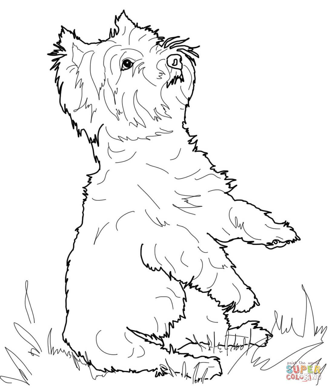 Yorkshire Terrier Or Yorkie Coloring Page Free Printable