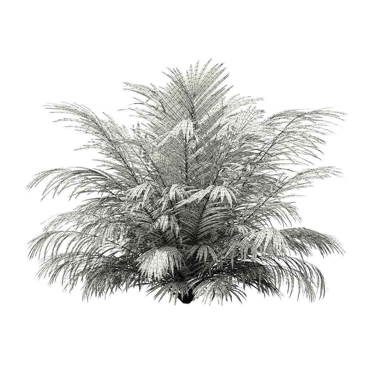 Golden Cane Palm Tree 3D Model 2 7m #Palm, #Cane, #Golden, #Model