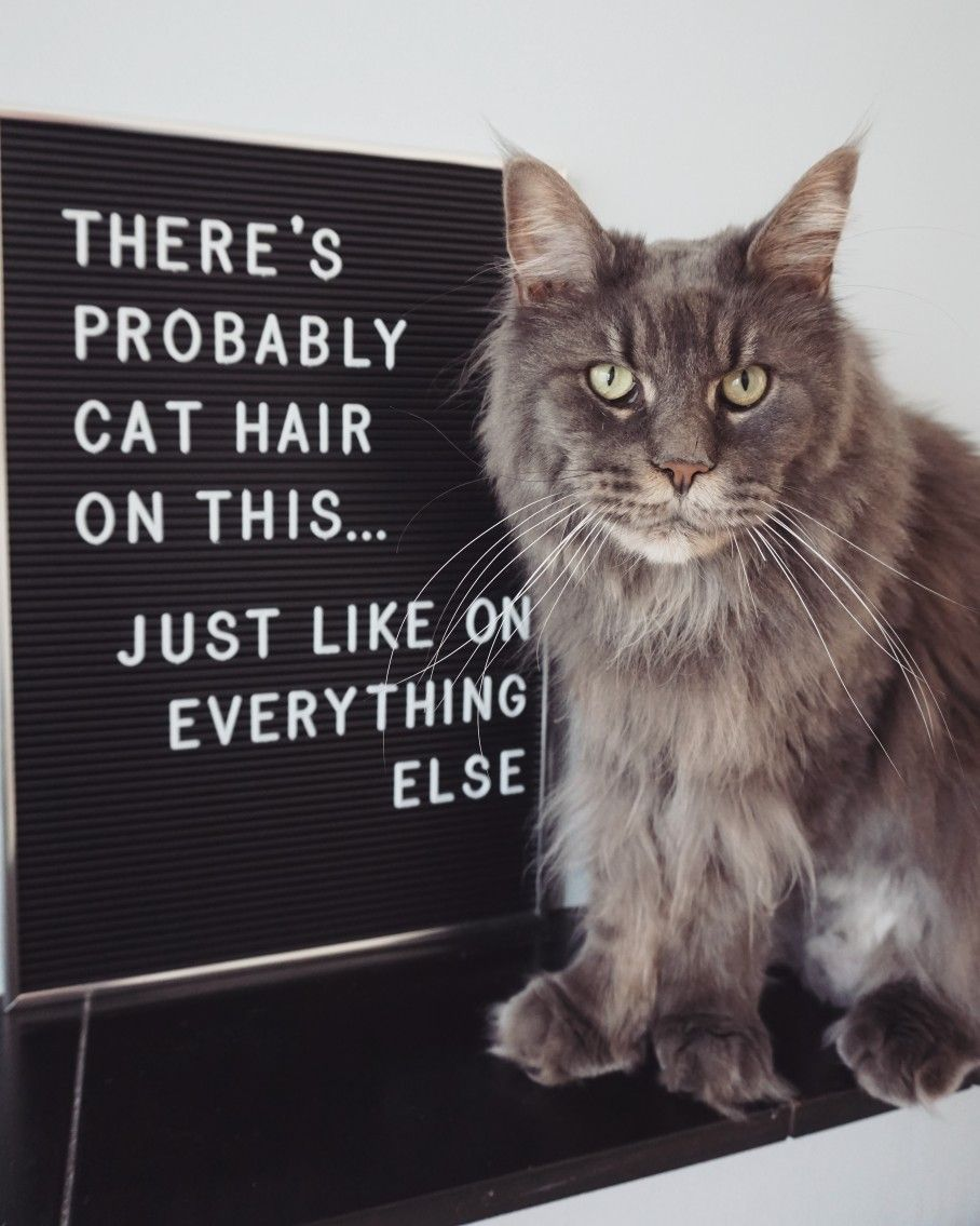 Every Cat Owner Knows This Cat Quotes Funny Cat Quotes Letter Board
