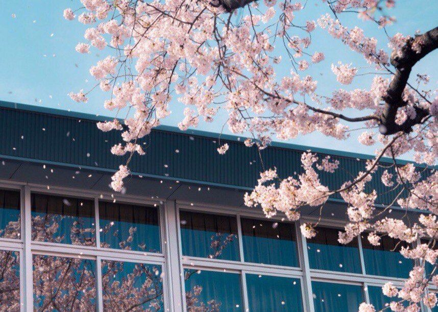 Momocka Pai Photography Your Lie In April Japan