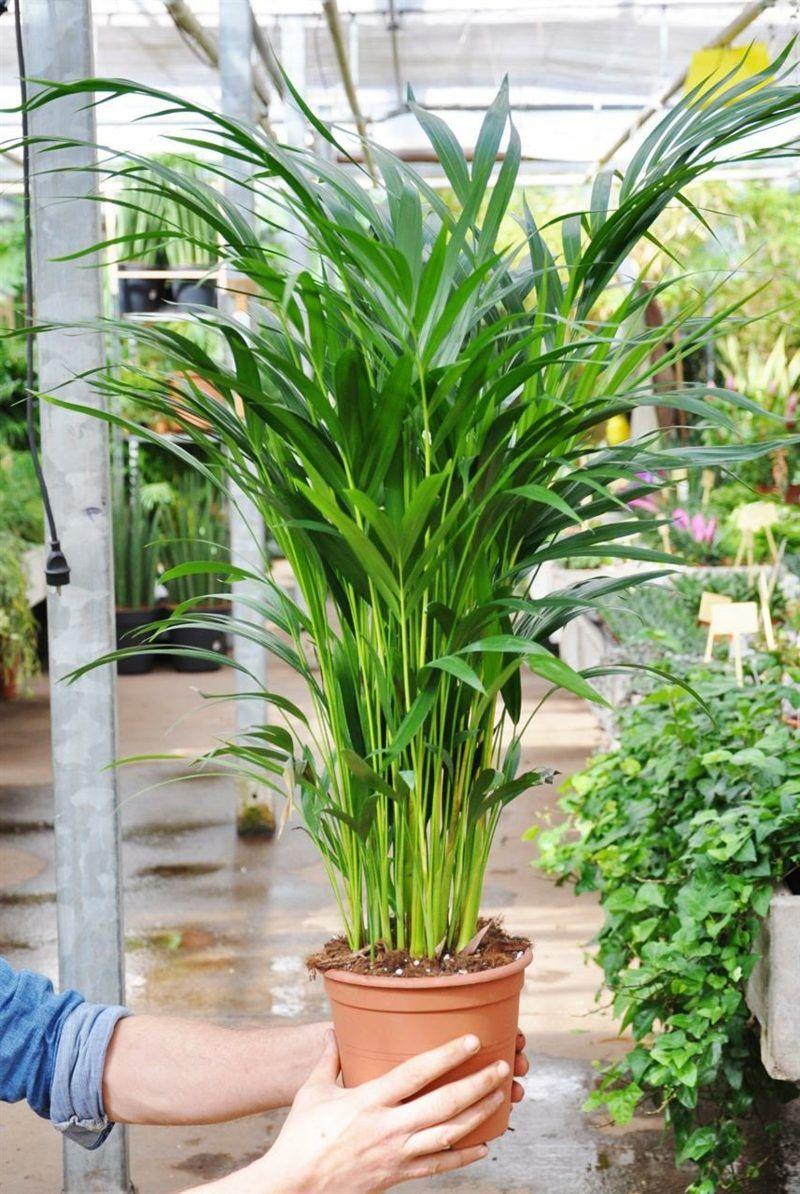 Sind grüne Pflanzen im Schlafzimmer schädlich oder nicht