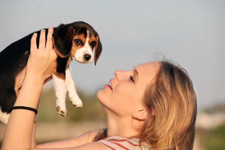How To Train A Beagle Puppy Everything You Need To Know Beagle