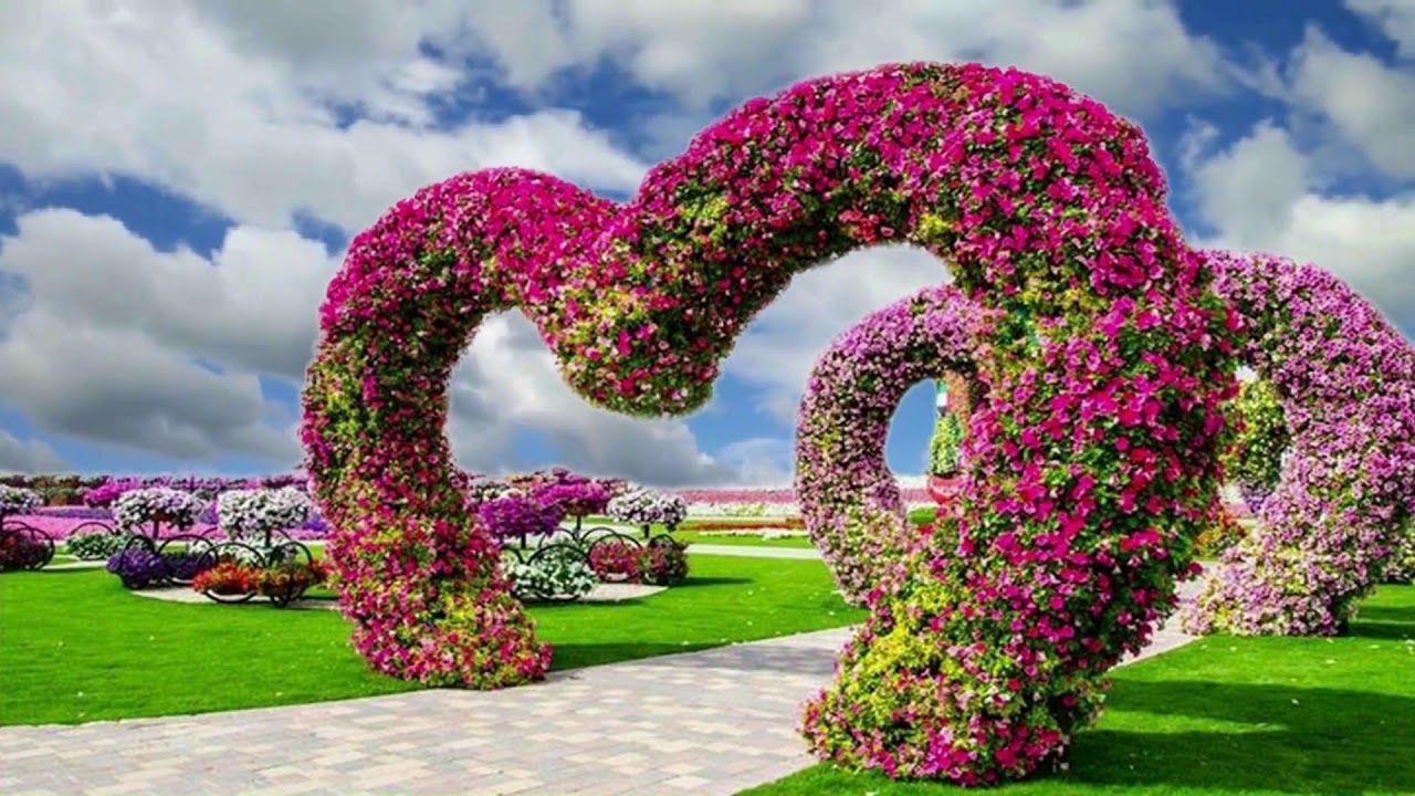 Flowers Rose, Background Video 809 Beautiful gardens