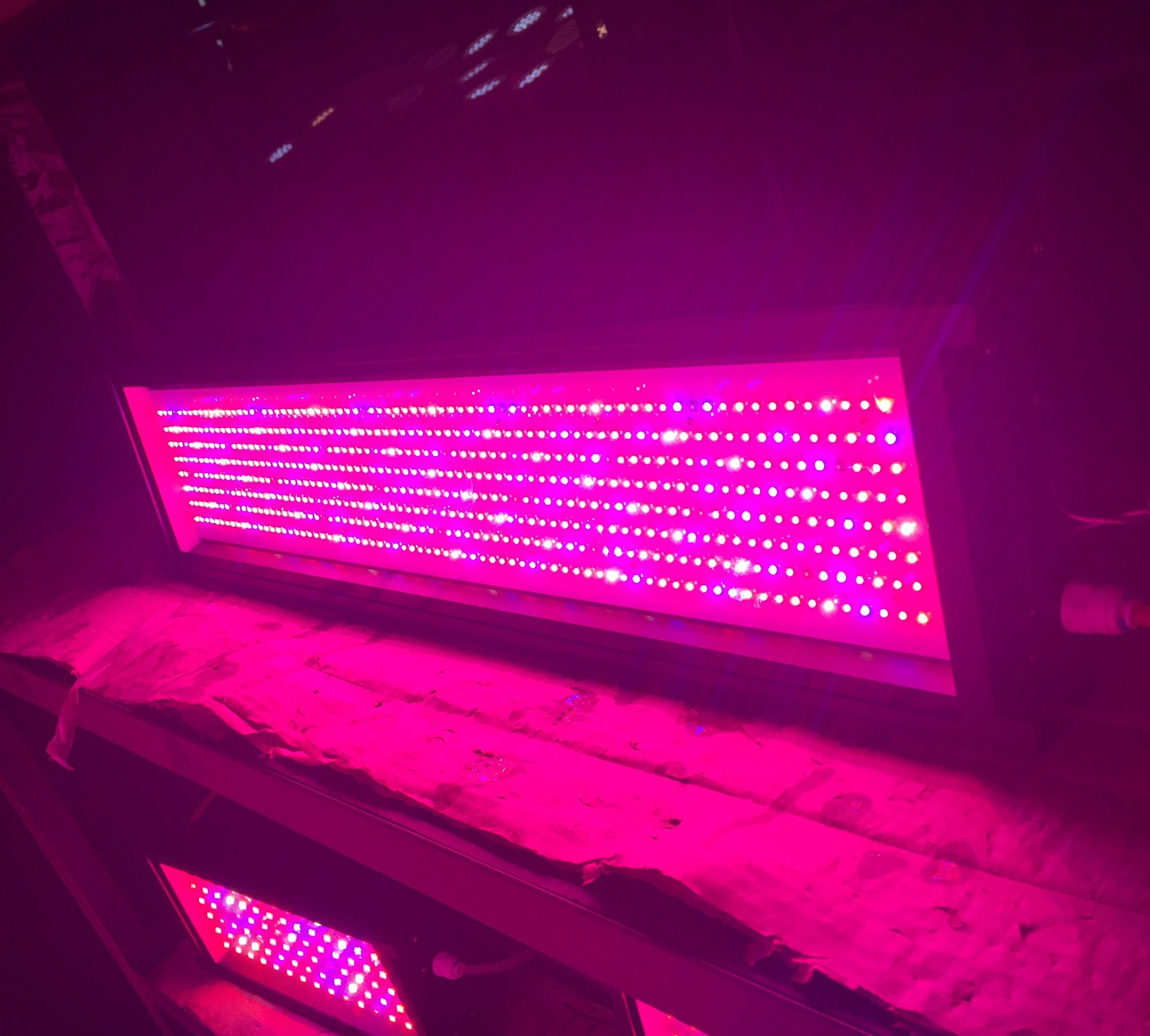 plant led top lighting my usa review galaxyhydro best light product grow lights home