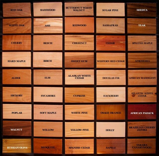 Wood Type And Wood Species Infographic Here Is A Fascinating