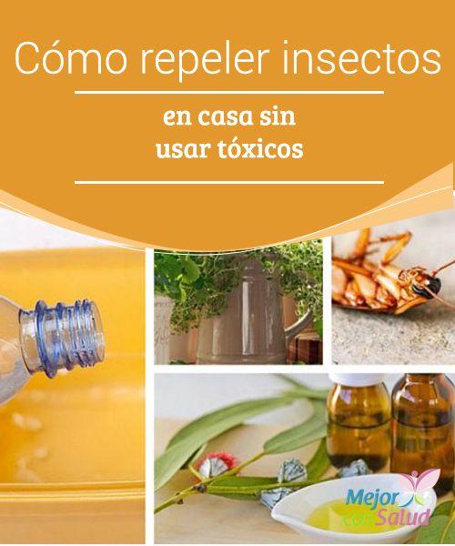 54 Ideas De Remedios Para Insectos Remedios Trucos De Limpieza Insecticidas Naturales