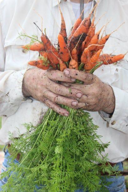 carrots-5.jpg 410×615 pixels