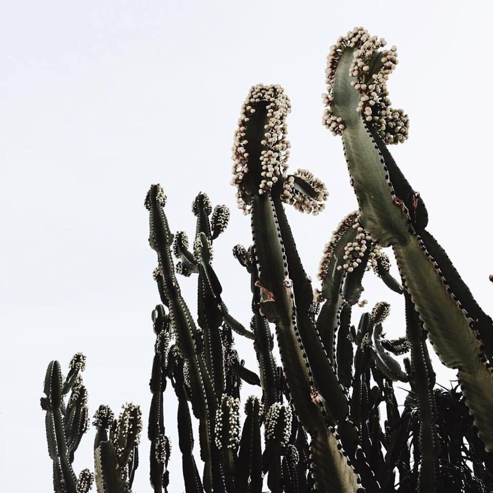 Pin Auf Botanical