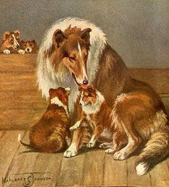 Collie and pups.