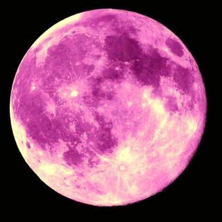 Full Pink Moon April This Name Came From The Herb Moss Or Wild Ground Phlox Which Is One Of Earliest Widespread Flowers Spring