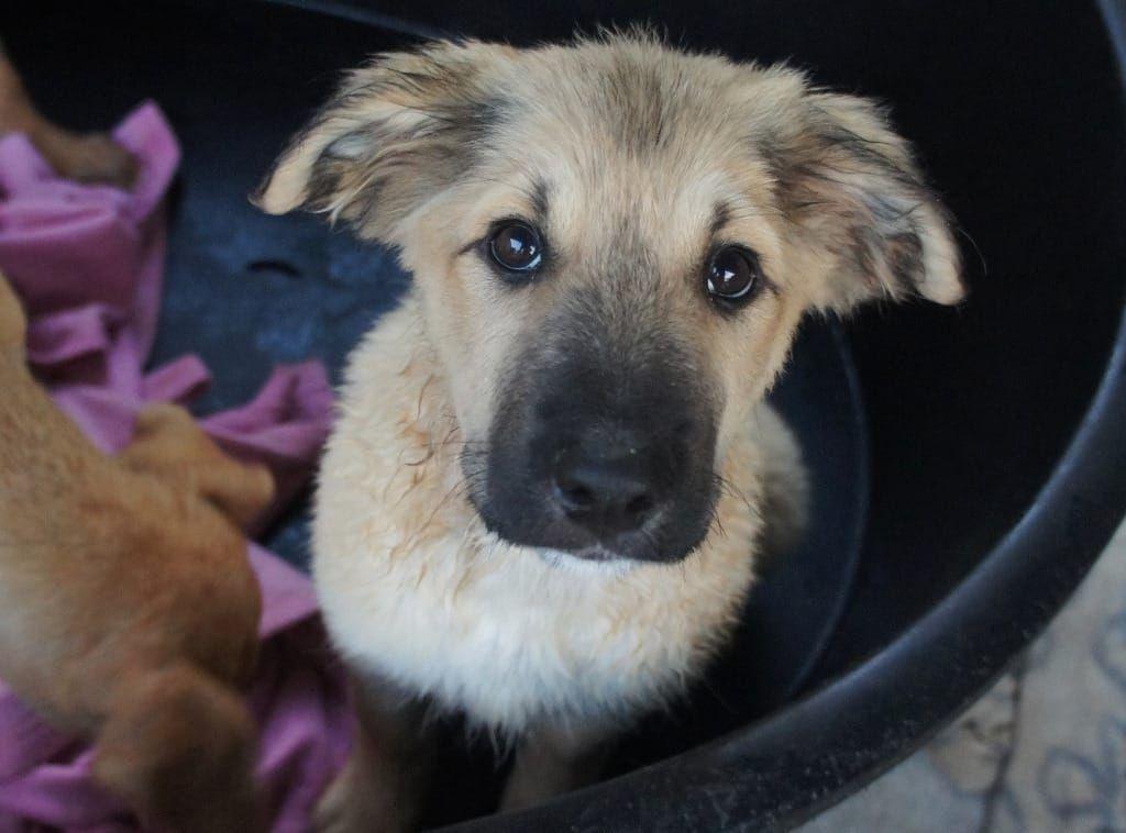 Niedliche July Hsh Mix Welpe 3 Monate Koln Tierheim Mischlingswelpe Uber 50cm Ausgew Deine Tierwelt De Tierheim Tiere Welpen