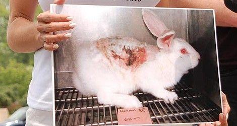 """Järkyttävä lakimuutos Suomeen – löytöeläimet voidaan kiduttaa hengiltä * """"Nyt Euroopan unioni on tuomassa Suomeen järkyttävää lakiuudistusta, joka laillistaisi karanneiden lemmikkien käytön koe-eläimenä."""" --- (Siis MITA VITTUA?!?) !!!!!"""