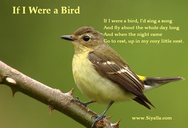 Bird - Download Nursery Rhymes/ Kids poems from Siyalla ...