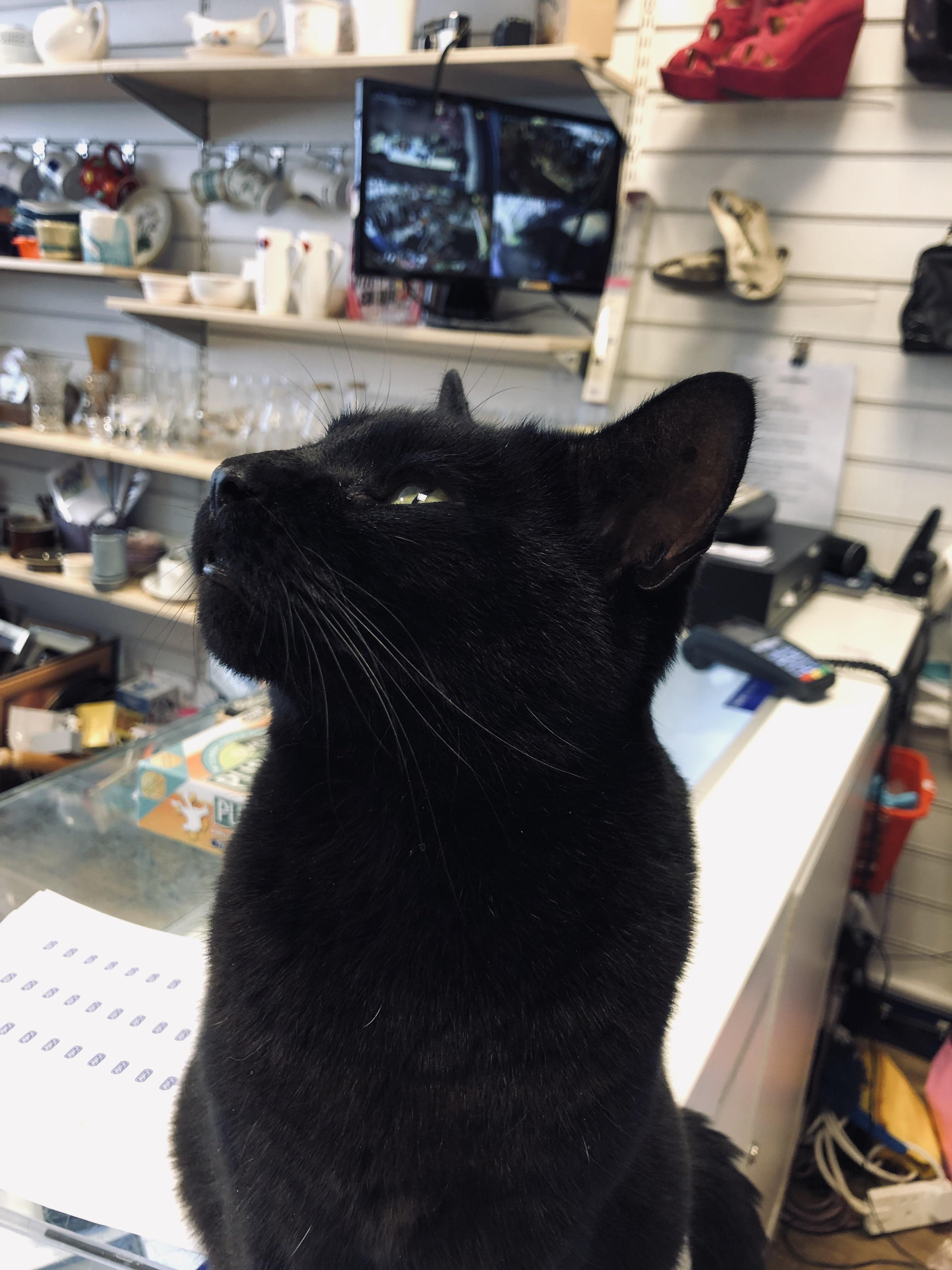 This is my little helper in our RSPCA shop with love