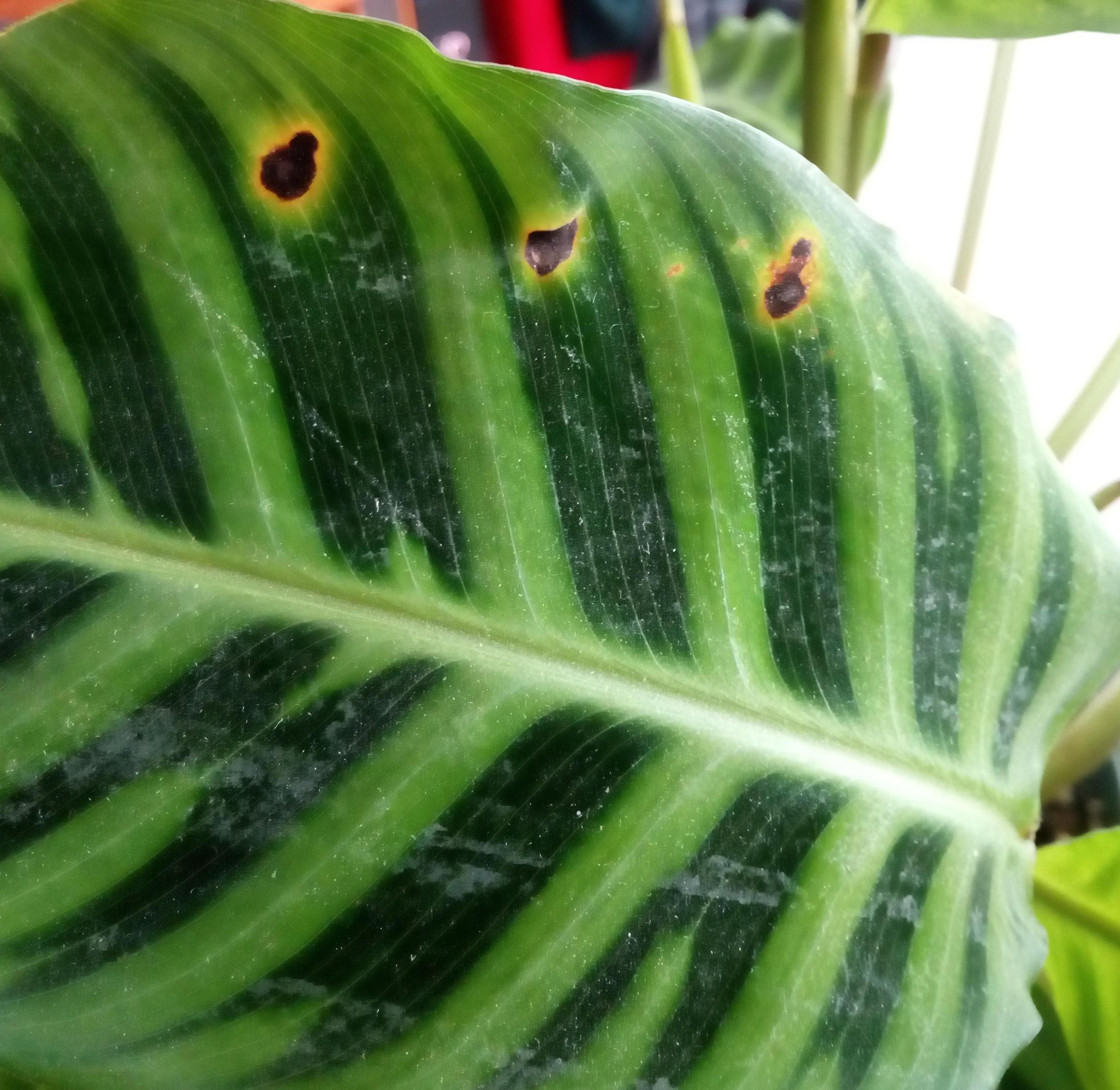 Pin On Plant Pests And Diseases