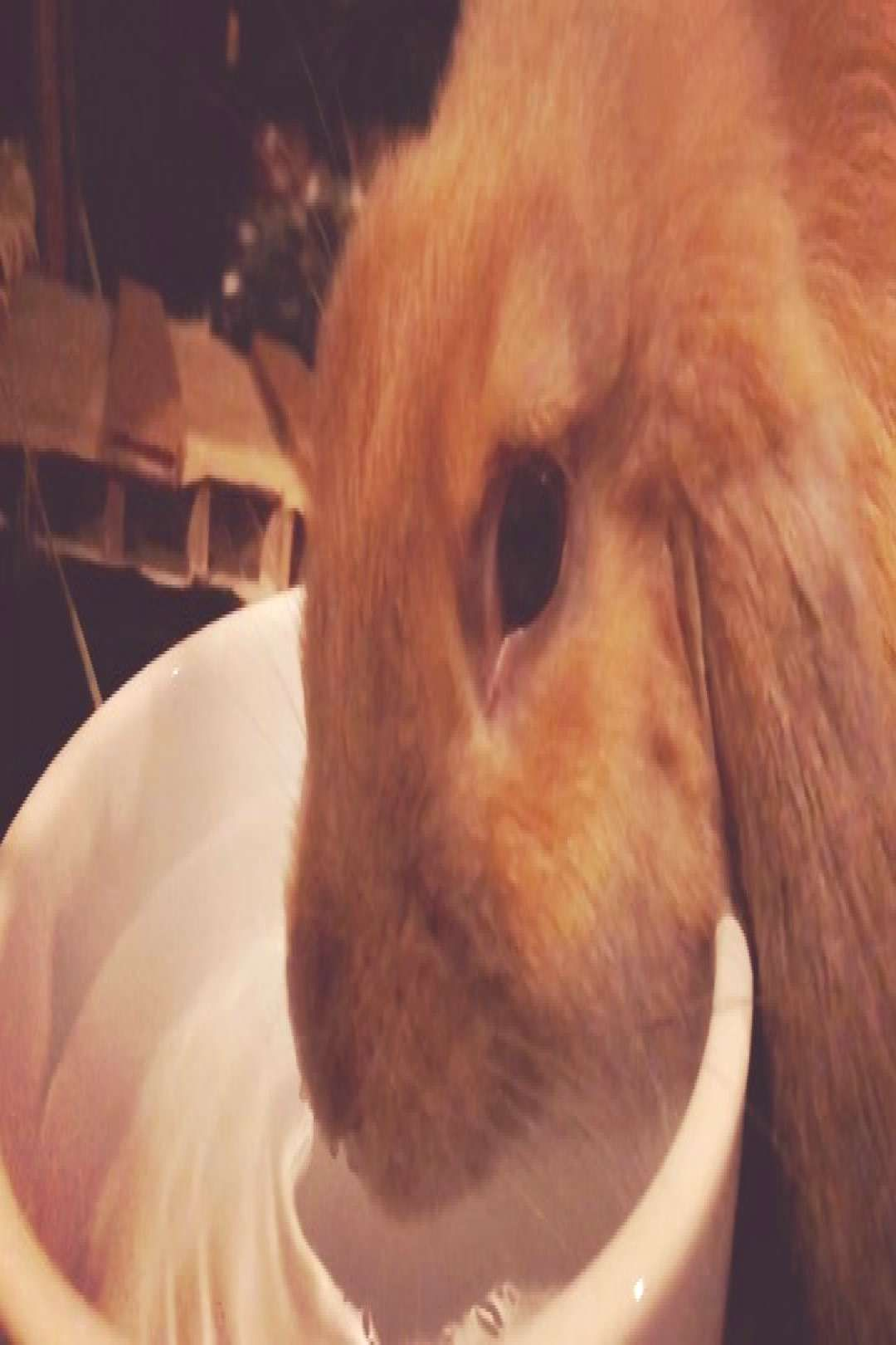 #rabbitsofinstagra #thirstythursday #slomovideo #drinkwater #drinking #water #on Drinking water on #thirstythursday #slomovideo #rabbitsofinstagraYou can find Drink water and more on our website.Drinking water on #thirstythursday #sl...